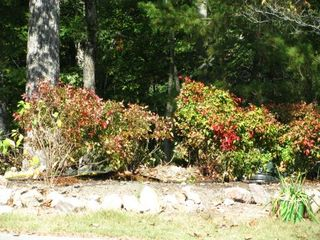 Nandina after full sun and transplant one week