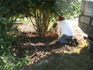 During large Shrub Removal
